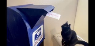 Zacky the Cat Fights Fascism in 2020 election